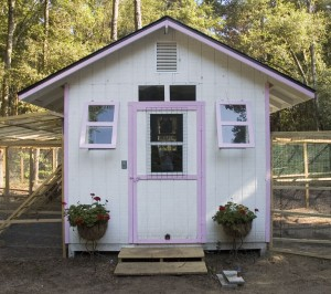 Chicken Coop - outside